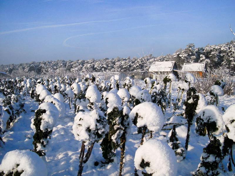 Gemüseanbau, Garten im Winter