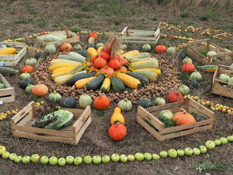 Gemüseernte, Erntedank