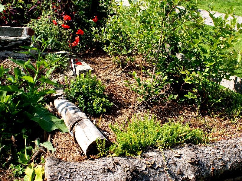 Ein Moorbeet im Garten