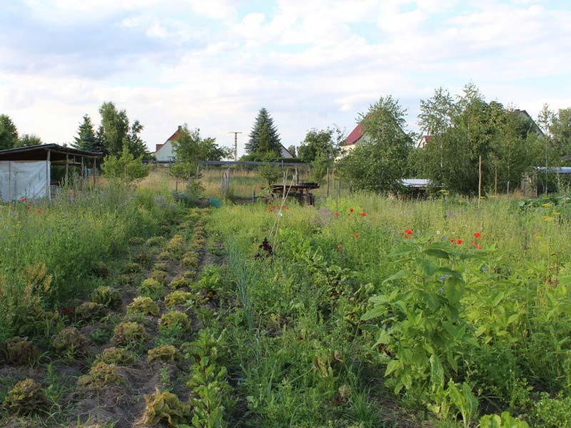 Permakultur-Hof Stein-Häger – Gemüseacker