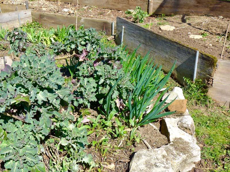 Das Beet in der Mitte – das einjährige Gemüse darum fängtan zu treiben.