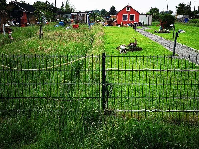 In Privatgärten vernichten Rasenmäher die Futterpflanzen und auch die Insekten.
