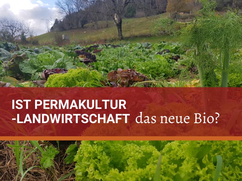 Mischkultur aus verschiedenen Salaten, Kohl und Fenchel auf dem Hof Morgenrot in der Schweiz