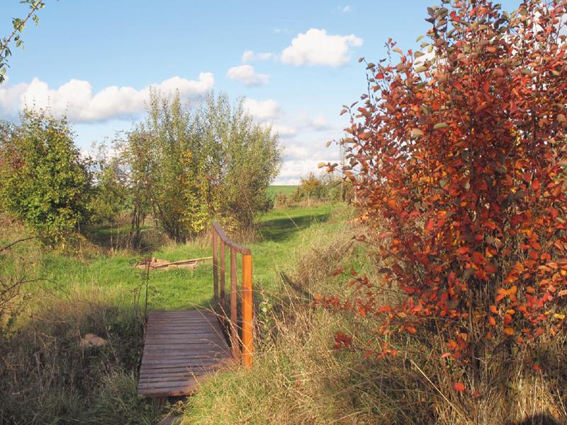 Permakultur-Park Bischbrunn - Felsenbirne an den Feuchtgebieten