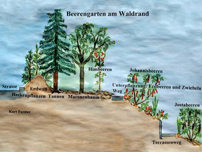 Querschnitt durch die südexponierte, produktive, artenreiche Waldrandzone, Illustration: Kurt Forster