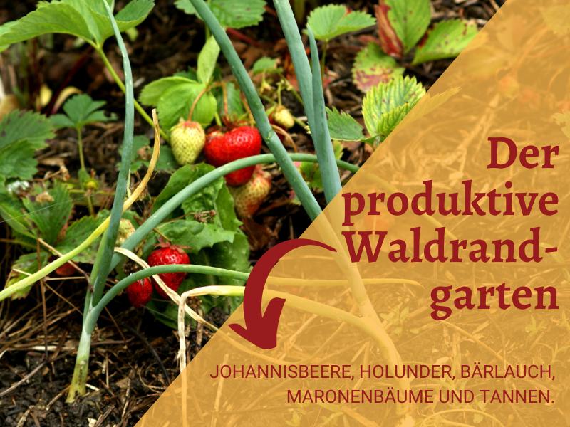 Der produktive Waldrandgarten liefert Johannisbeeren, Holunder, Bärlauch und Lebensraum (Foto © Kurt Forster)