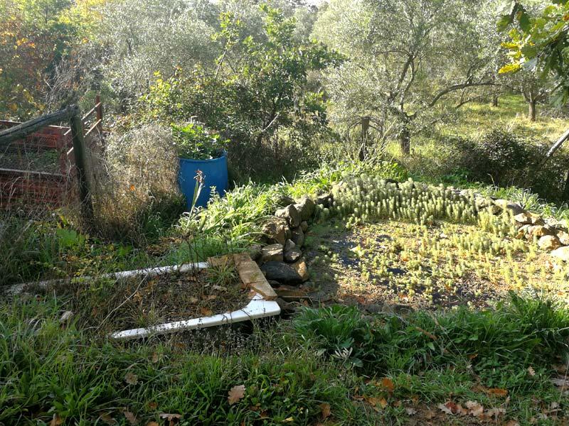 Pflanzenkläranlage für Grauwasser mit Teich am Earthship (Foto © Saviana Parodi)